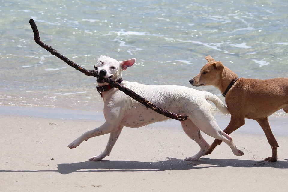 happy dogs at beach